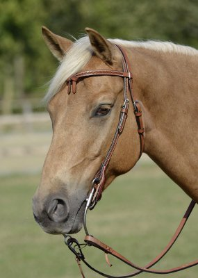 Headstall CADDO
